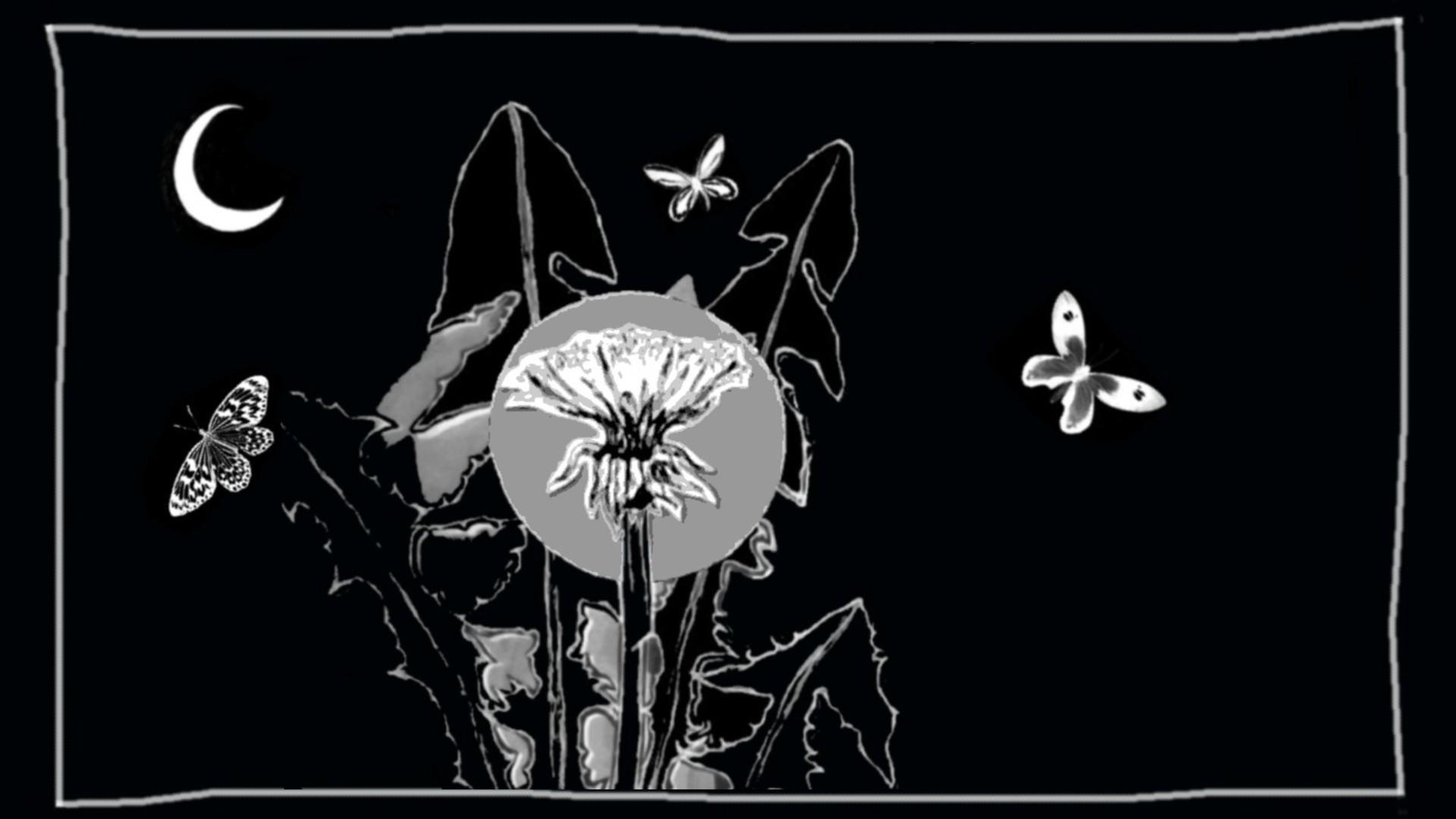 Dandelion by Jay Hampton