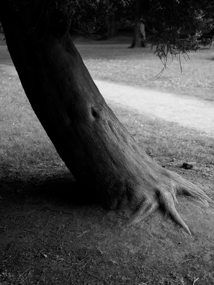 Photography by Mario Popham, for wigan arts festival, photographing nature during lockdown. A black and white photograph of a tree trunk.